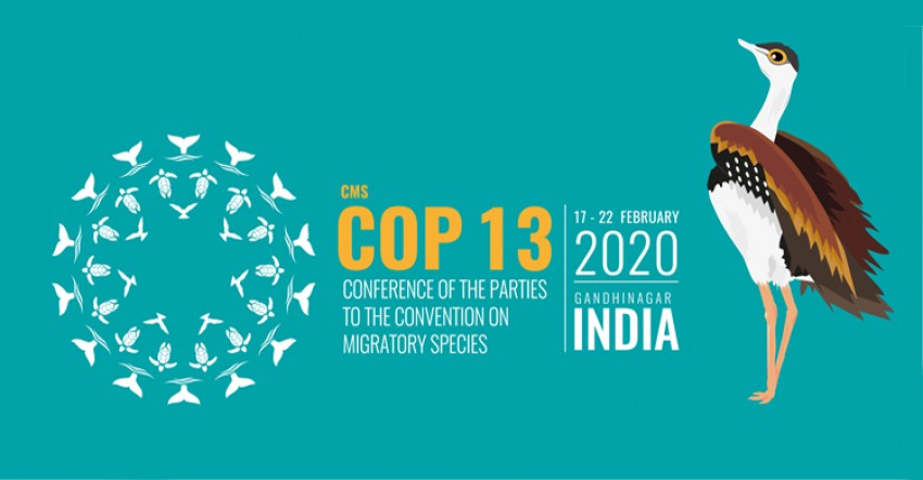 Ecological Connectivity to Be Focus of CMS COP13 in India