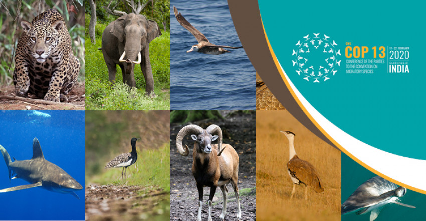 CMS COP13 Opening Press Release : Major UN Meeting on Wildlife to Address Critical Threats to Migratory Species