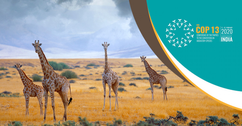 Africa-Wide Conservation Strategy for Giraffe