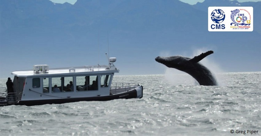 COP12 to Offer Guidelines for Boat-Based Wildlife Watching