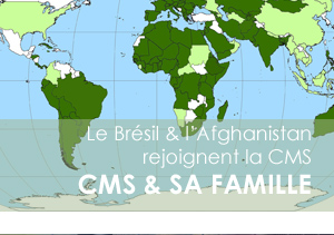 CMS montly banner