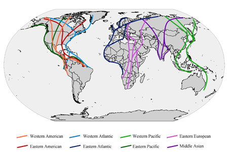 Global Flyways