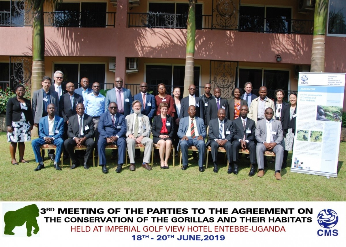Gorilla Agreement Meeting Sparks Off New Action and Enhanced